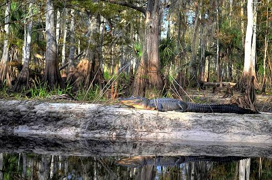 Gator Country by Bob Jackson