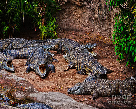 Gators by Fred L Gardner