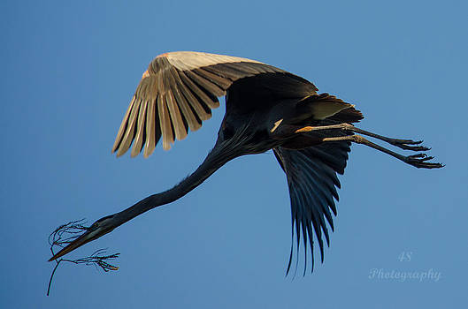 GBH Nesting2 by Brian Manley