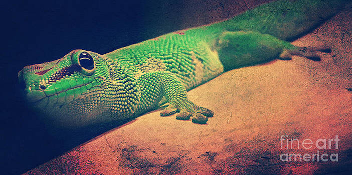 Angela Doelling AD DESIGN Photo and PhotoArt - Gecko