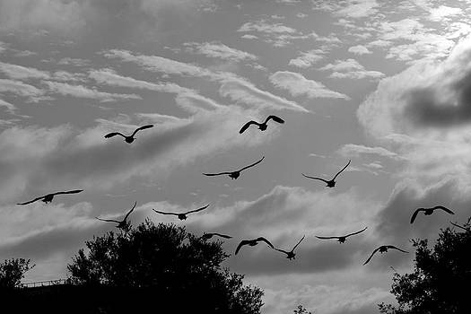 Geese at Sunset by Mark DeJohn