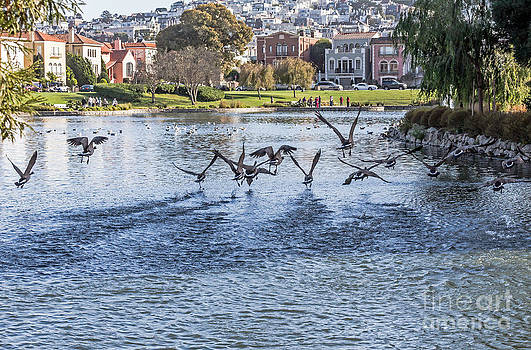 Kate Brown - Geese at the Palace