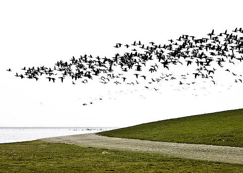 Geese by Frits Selier