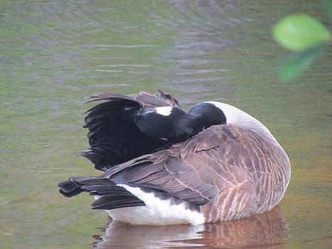 Geese by Pamela Morrow