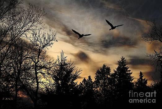 Geese Silhouette by Marjorie Imbeau