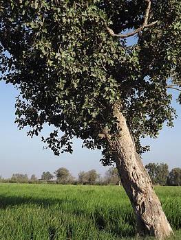 Gemez Tree by Essam Ramadan