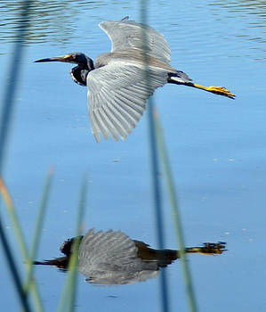 Gentle Flight by Julie Cameron