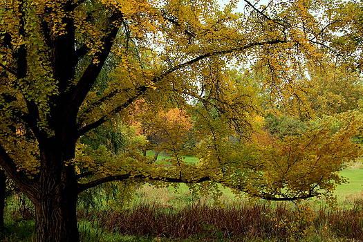 Rosanne Jordan - Gentle Golden Ginkgo in Autumn