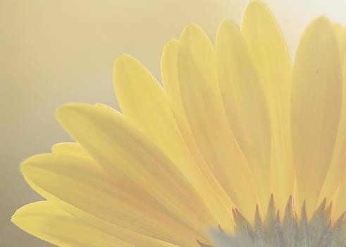 Gerbera Daisy-Yellow by Jessie Gould