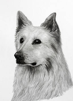 German Shepherd by Lorraine Foster