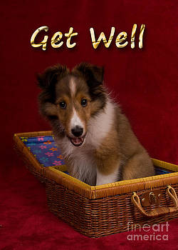Jeanette K - Get Well Sheltie Puppy
