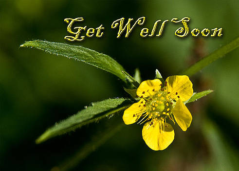 Jeanette K - Get Well Soon Buttercup