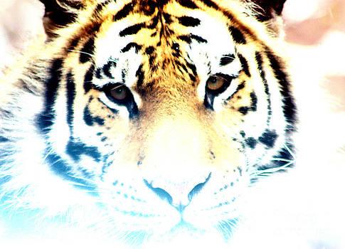 Nick Gustafson - Ghost Tiger