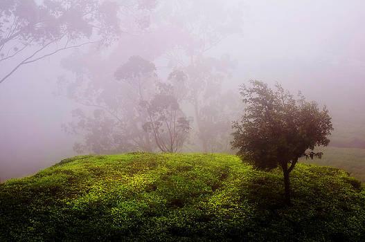 Jenny Rainbow - Ghost Tree in the Haunted Forest. Nuwara Eliya. Sri Lanka
