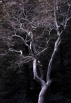 Kae Cheatham - ghost tree