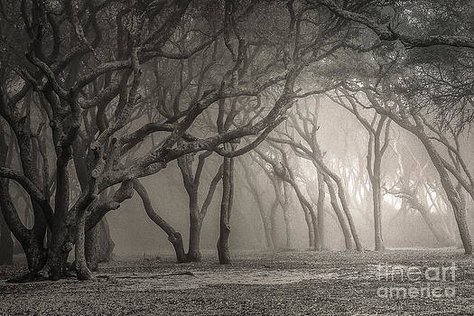 Ghosts of Fort Fisher by Vicki Kohler