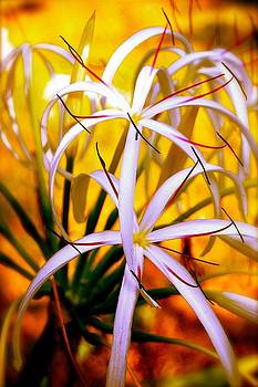 Giant Crinum Lily by Don Bangert