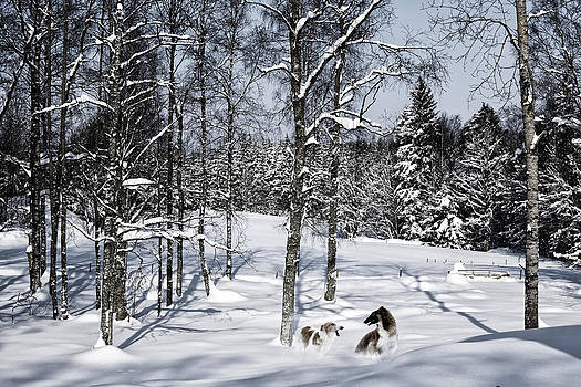 Giant Dogs Playing In The Snow by Christian Lagereek