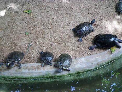 Giant Tortoise by Sunanda Yapa