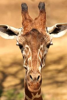 Giraffe by Elizabeth Budd