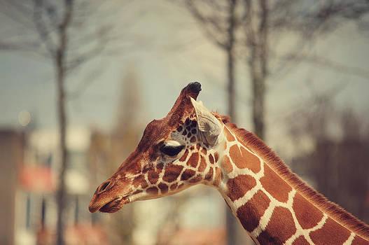 Jenny Rainbow - Giraffe in Amsterdam