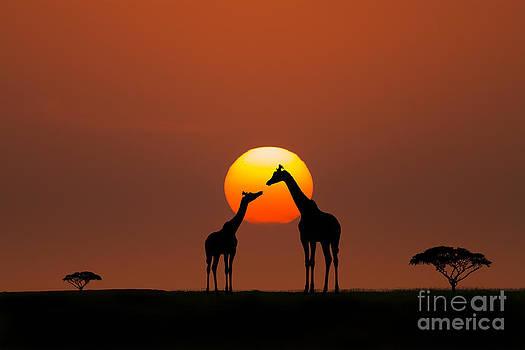 African Sunset by Bahadir Yeniceri