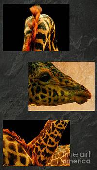 Cheryl Young - Giraffe Triptych