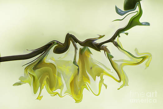 Glass Forsythia by Noel Zia Lee
