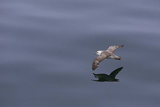 Glassy Swoop by Jack Molan