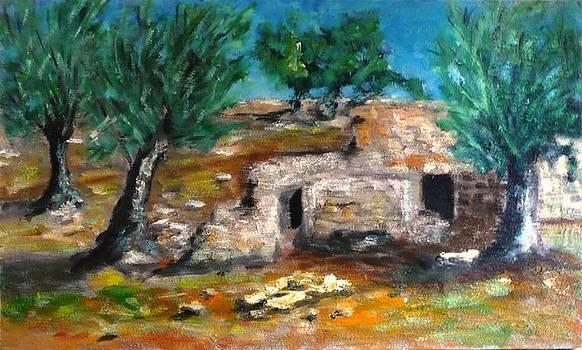 Gli ulivi di Puglia by Sandro Sabatini