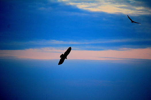 Gliding sky by David  Jones
