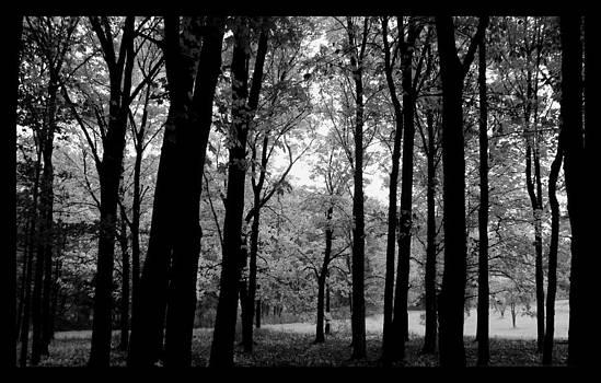 Rosanne Jordan - Glow Through the Shadows of Trees
