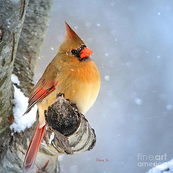 Glowing In The Snow by Nava Thompson