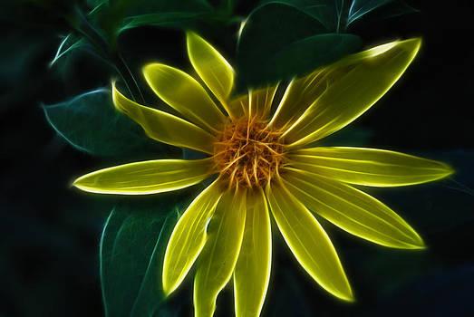 Cindy Boyd - Glowing Yellow Wildflower