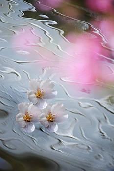 Jenny Rainbow - Go with Spring Flow
