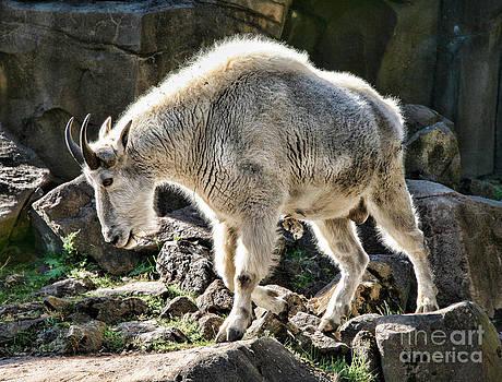 Chuck Kuhn - Goat Mountain