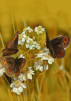 Gold and Brown by Jacqi Elmslie