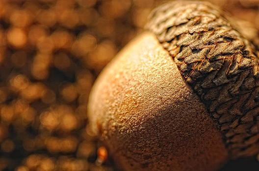 Golden Acorn by Sarah Rodefeld