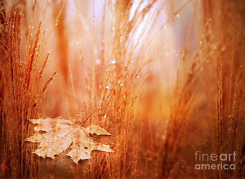 Golden Autumn by Claudia Burlager