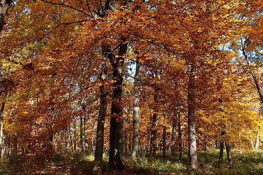 Rosanne Jordan - Golden Autumn Day