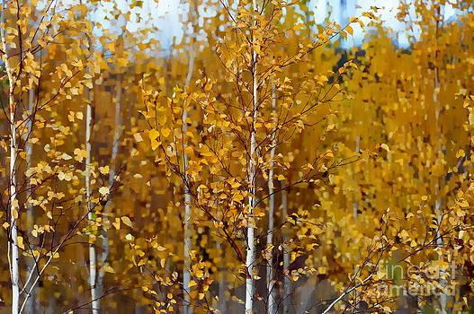 Golden Birches by Andrea Kollo
