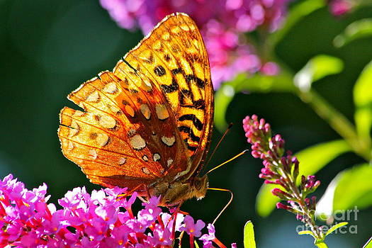Golden Butterfly by Jay Nodianos