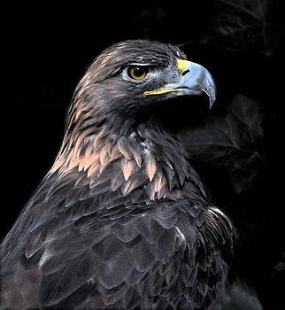 Golden Eagle Portrait 2 by David Marr