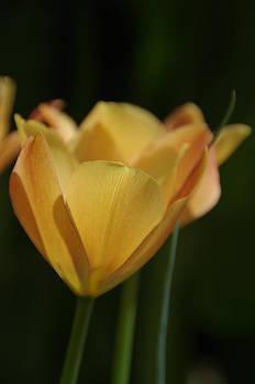 Marilyn Wilson - Golden Embrace