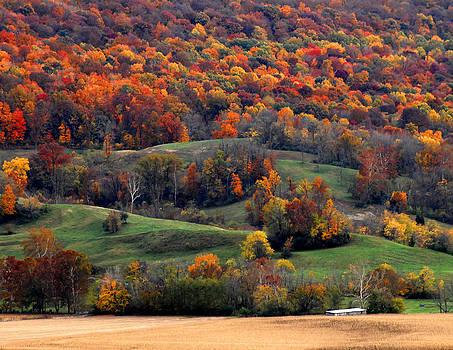 Randall Branham - golden fields golden trees green pastures
