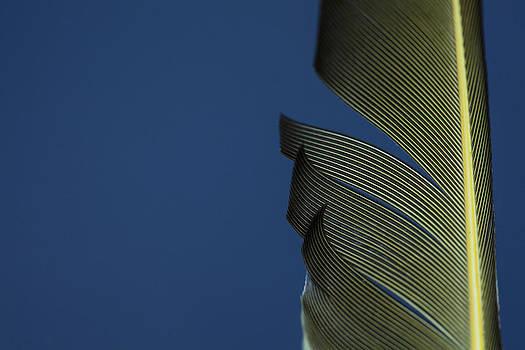 Karol  Livote - Golden Finch Feather