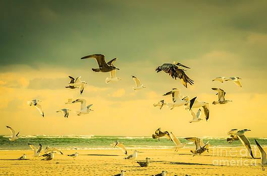 Golden Pelican Flight Pattern by Crissy Anderson