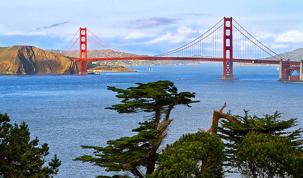 Golden Gate Bonzai by Shelle Ettelson