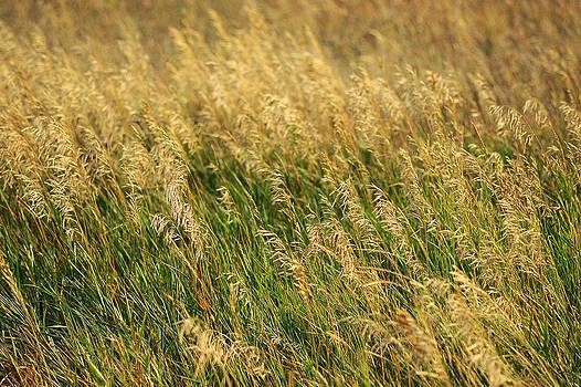 Mary Lee Dereske - Golden Grain of Summer