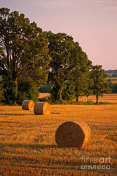 Golden Hay Field by Deanna Wright